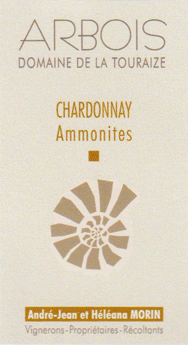 ammonite-NEW
