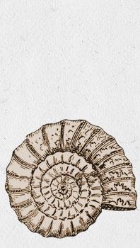 ammonite-historique3