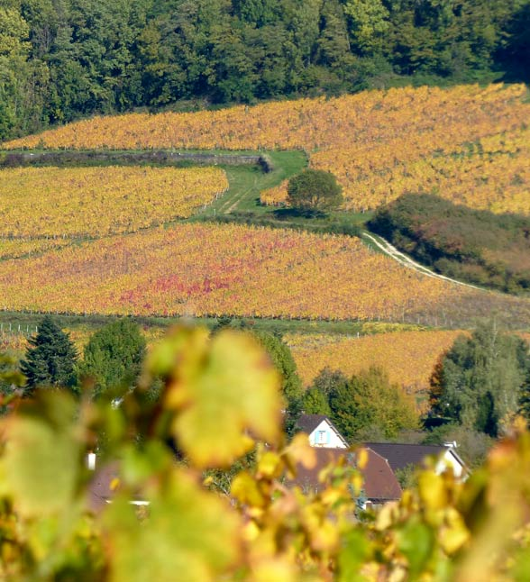 photo-accueil-vignes-arbois-vins-bio-touraize