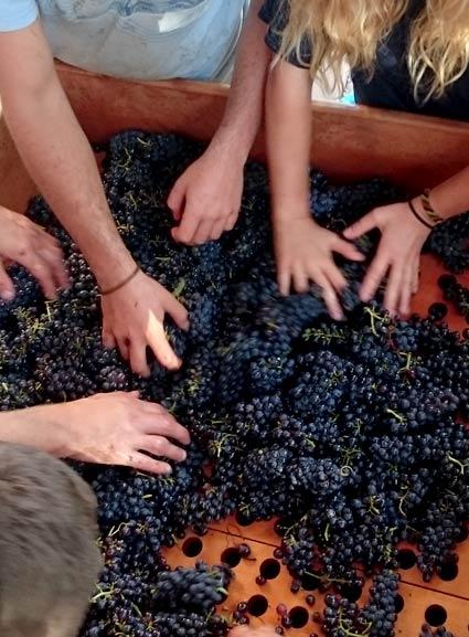vins-arbois-domaine-touraize-accueil-2