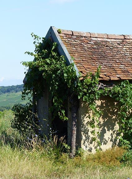 vins-arbois-domaine-touraize-accueil-5